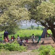 Schulen unter dem Baum